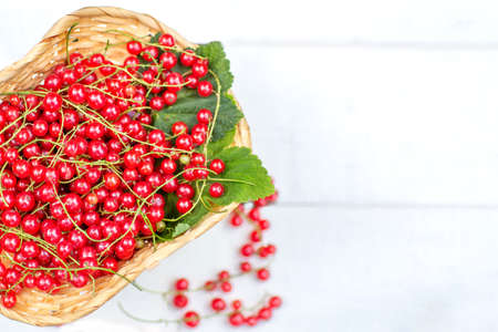 A basket of red currants on a white bench.