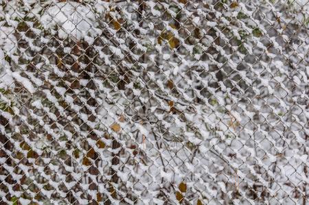 enclosing: Prima neve sulla recinzione maglia d'acciaio che racchiude il giardino d'autunno Archivio Fotografico
