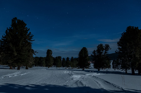 cedars: Winter night landscape in mountains with stars and cedars