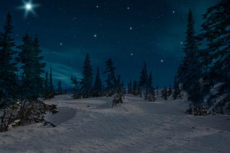 Scena di notte con alberi di Natale innevati in inverno foresta sullo sfondo di stelle e il cielo