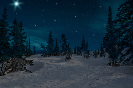 Night scene with snow-covered christmas trees in winter forest on the background of stars and sky