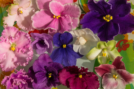 colorful flowers: Bright spring floral background of colorful flowers violets Stock Photo