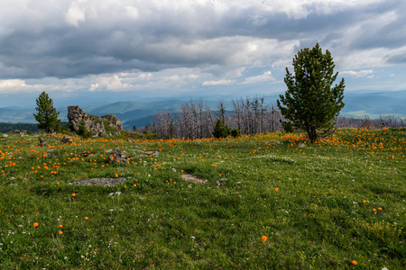 cedars: Scenic view of meadow with white and orange wildflowers, dry trees, stones and cedars on the background of mountains, sky and clouds