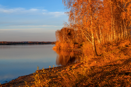 placid water: Colorful autumn landscape with birch grove with golden foliage on the shore of the lake and beautiful reflections at sunset
