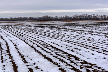 furrows: Autumn landscape with a plowed field with a black ground and snow in the furrows in late autumn