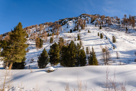 spruce tree: Beautiful winter views of the mountainside covered with trees and snow with traces in the snow against the blue sky