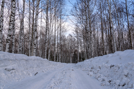 drifts: Winter road through the birch grove with high thin birches among the snow and snow drifts against the blue sky