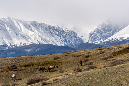 sparse: Scenic view with the beautiful mountains with snow and glaciers, and a herd of horses grazing on a hillside with sparse vegetation