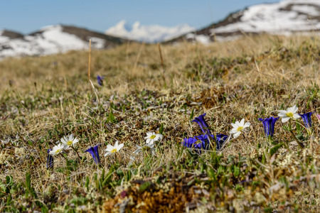 Scenic view with dry grass and flowers on a background of mountains covered with snow on a sunny day