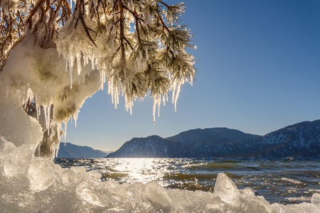 ice floe: Beautiful winter views with the lake, mountains, ice on the shore, the sun glare on the water, and pine branches with icicles on a sunny day