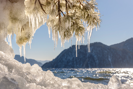 Beautiful winter views with the lake, mountains, ice on the shore, the sun glare on the water, and pine branches with icicles on a sunny day