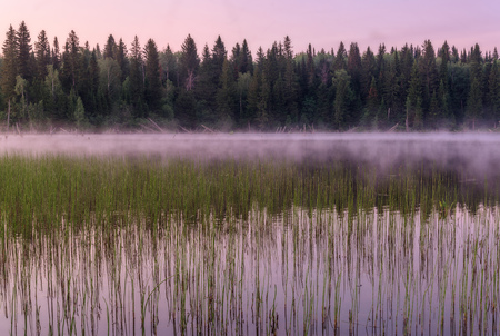 Beautiful scenery in pink tones with a lake, forest, grass and fog at dawn Stock Photo