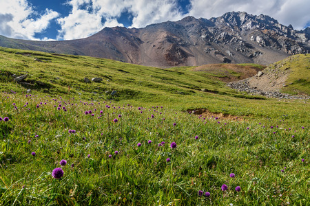 Bright green alpine meadows with violet wildflowers Allium schoenoprasum high in the mountains against the backdrop of a gray rocky summit and a blue sky with clouds