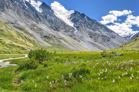 Beautiful summer view with white fluffy Eriophorum flowers, mountains and river on the background of a blue sky with clouds