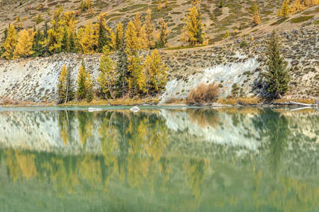 Autumn reflections slope of the mountain with green spruce and golden larches in the smooth water of the river Stockfoto