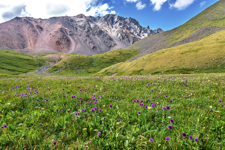 Purple wildflowers Allium schoenoprasum on a bright green alpine meadow against a background of mountains and a blue sky with clouds Stock Photo