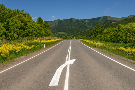 Amazing view with an asphalt road in the mountains, trees and bright yellow flowers on the roadside against a blue sky