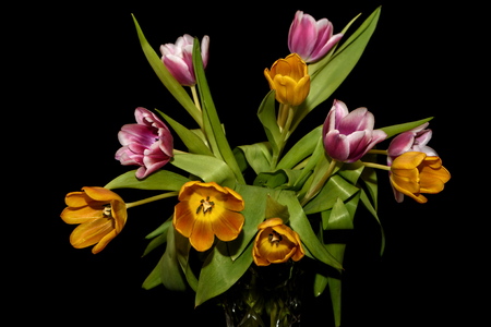 Beautiful bouquet with amazing orange and magenta tulips close-up on black background