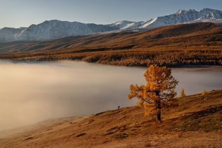 Amazing autumn top view o the mountains covered with snow and forest, dense fluffy fog over the lake and a small silhouette of a tourist at sunrise. Altai, Russia Standard-Bild - 140373485