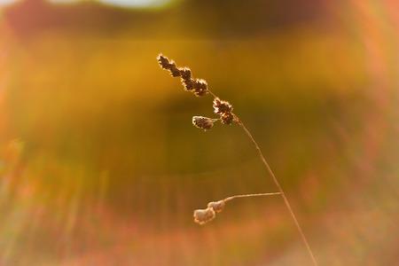Blurred field
