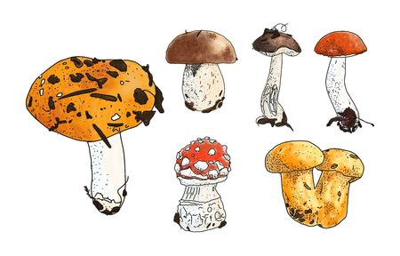 illustration of mushrooms set