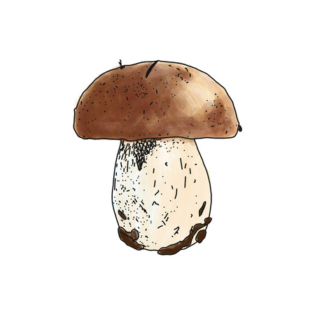 cep: illustration of Boletus edulis mushroom on white