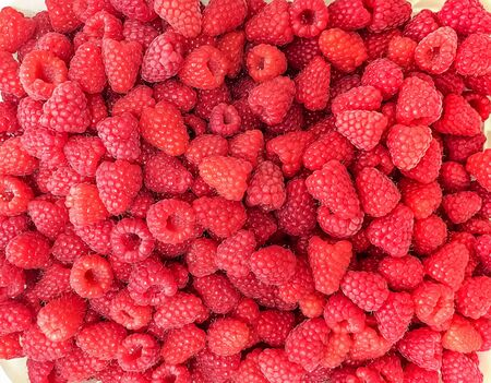 Harvest delicious raspberries. Red berry raspberries. 版權商用圖片