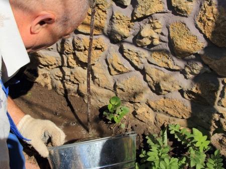 emmer water: mannen met een emmer water boom Stockfoto