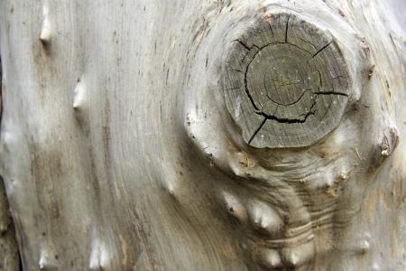 wood log: bark wood as natural background