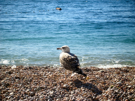 timorous: seagull by the beach