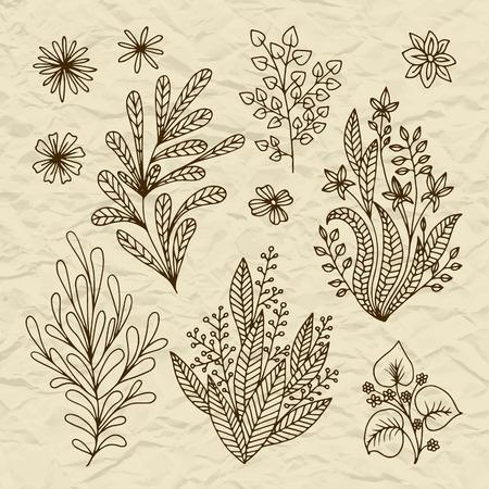 hojas antiguas: Conjunto de hojas estilizadas flores, retro ramas viejas de la vendimia en el papel rasgado remolinos