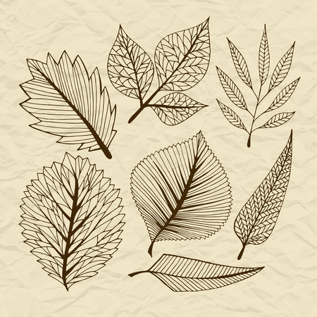 stylised: Set of vector stylized leaves, retro old vintage branches on torn paper, decorative elements for design