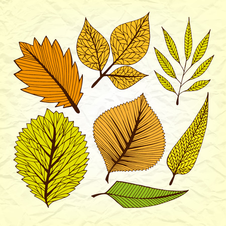 frondage: Set of vector stylized autumn leaves, retro old vintage branches on torn paper, decorative elements for design Illustration