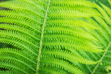 Carved leaves of a fern. Close-up. Selective focus. Abstract background.