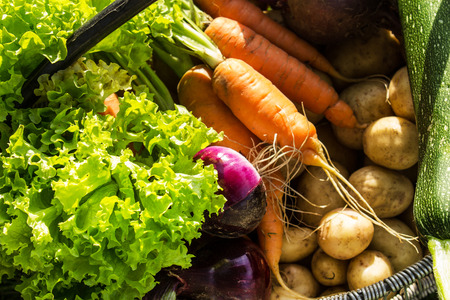 close up of onions in a basket: Salad, onions, carrots, beets, zucchini. Fresh vegetables in a basket. Close-up. Selective focus. Horizontal.