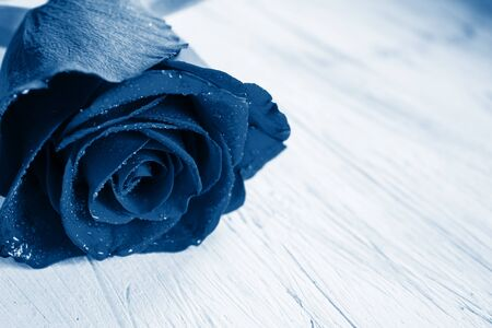 Valentine's day concept. Rose in classic blue color on a light background. Place for text.