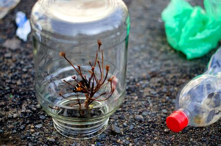 A small butterfly closes in a jar with a dried plant. Around the cans are trash, plastic bottles, plastic bags, paper. The concept of saving the world from garbage. Stok Fotoğraf