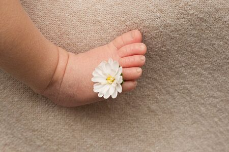 feet of the newborn baby with flower, fingers on the foot, maternal care, love and family hugs, tenderness Stockfoto