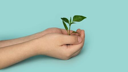 Seedling green sprout with leaves in kid's hands on a blu background. New life, birth. Plant growing. Copy space
