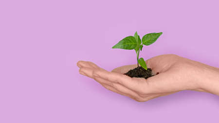 green sprout with leaves and a piece of land in the palm on a pink background. New life, birth. Plant growing. Copy space.