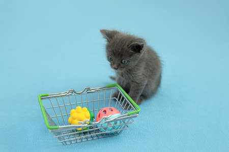 Gray kitten with pet toy a shopping basket. shopping for animals. Pet shop, pet Market.