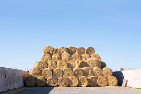 round stacks of dry grass hay stacked for storage