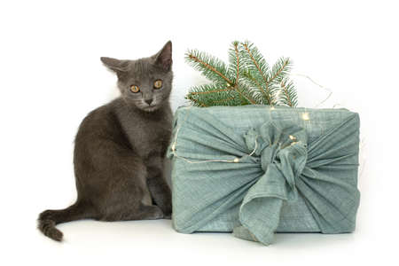 Gray cat and wrapping gifts in fabric for Christmas in furoshiki style. Eco friendly concept. DIY. isolate Standard-Bild