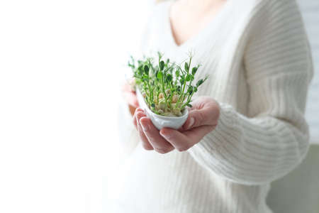 Peas microgreens in woman hands. Earth Day. Seed Germination at home. Space for text. Concept Vegan and healthy eating. Growing sprouts Standard-Bild
