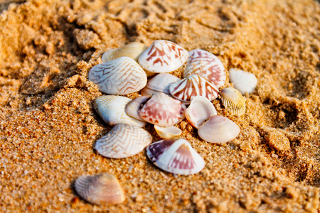 Seashells on the sand, beach of the Indian ocean, India, GOA Stock Photo