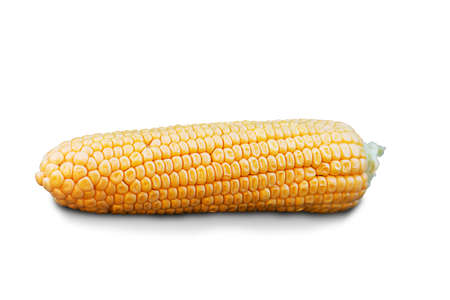 cobs of ripe corn on a white background, harvesting