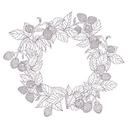 tench: Round wreath or frame of branches of raspberry with leaves and berries on a white background. Branches painted dark tench and filled with white. Wreath isolated from the background.Vector illustration Illustration