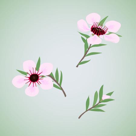 pink bushes: Set of flowers the honey bush tea tree or manuka. Isolated.