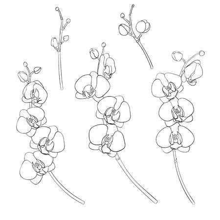 Ensemble de branches isolées d'orchidées dessin noir à la main. Sur un fond blanc isolé. Illustration dessinée à la main. Vecteurs