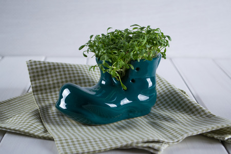 Miniature boot shoe with fresh cress on a white background. Spring is coming Stock Photo